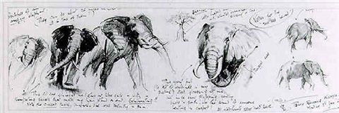 sketches of an angry elephant by terence cuneo