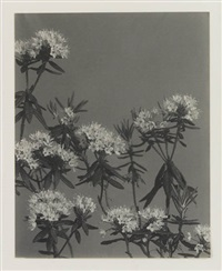 wildflowers of new england (10 works) by edwin hale lincoln