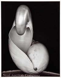 shell by edward and cole weston