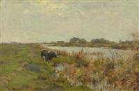 a cow in a polder landscape by gerard altmann