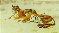 tigers resting by john charles dollman