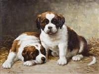 two saint bernard puppies by anton karssen