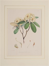from the rhododendrons of sikkim-himalaya by joseph (sir) dalton hooker