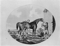 the life and death of a racehorse by charles ansell