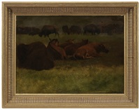 buffalo resting by albert bierstadt