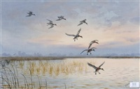 widgeon flighting by john cyril harrison