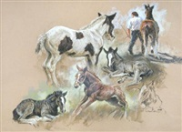 study of ponies and foals by mick cawston