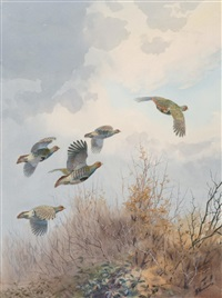partridge rising to clear the hedge by john cyril harrison