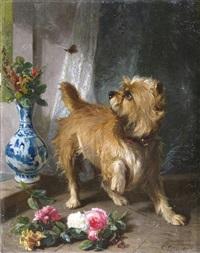 a norwich terrier chasing a butterfly by conradyn cunaeus