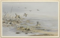 jack snipe on the banks of a river by george edward lodge