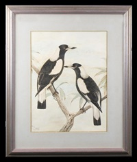 magpies by neville william cayley