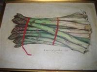 asparagus by jacques hnizdovsky