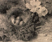 a birdsnest and briar roses by helen cordelia angell