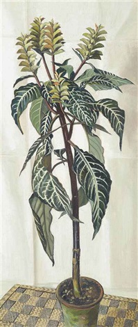 aphelandra squarrosa in an interior by nan youngman