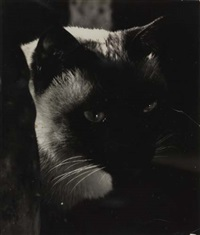 untitled (cat) by carlotta m. corpron