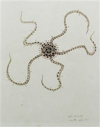 detailed botanical image of an ophiuroid, indistinctly labelled as ophio textuinta (??) by walter spies