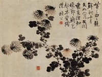 菊花 (chrysanthemum) by bian shoumin
