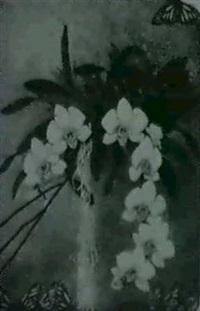 orkideer by kerstin posse