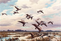 canada geese- marsh landing by harry curieux adamson