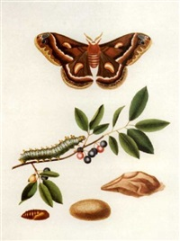 the natural history of the rarer lepidopterus insects of georgia by james edward smith
