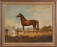 portrait of the horse