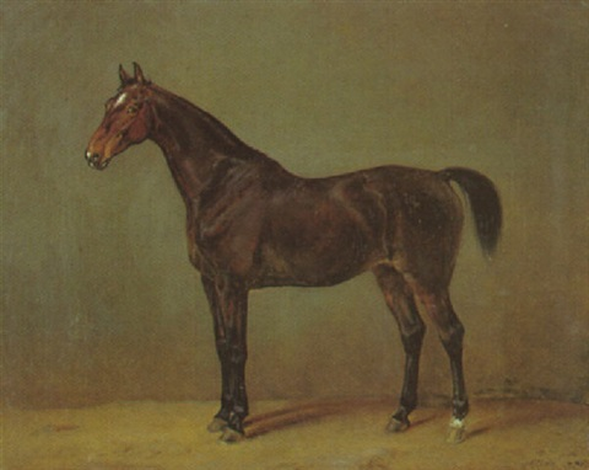 links bei pferden
