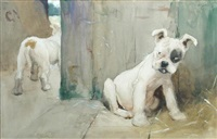 boxer puppies in a barn by cecil charles windsor aldin