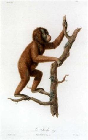 histoire naturelle des singes et des makis by jean baptiste audebert