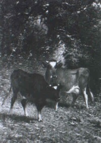 bovines in a wooded landscape by james mcdougal