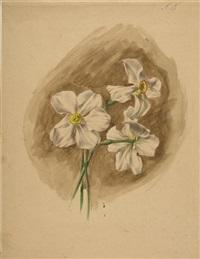 große rote blüte (+ drei narzissen; 2 flower studies) by emile-charles labbé