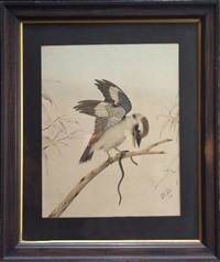 kookaburra by neville henry peniston cayley