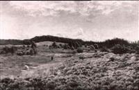hirtenbube und schafe in einer bluheneden heidelandschaft by fritz johannes bentzen-billkvist