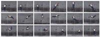 street gym (in 18 parts) by robin rhode