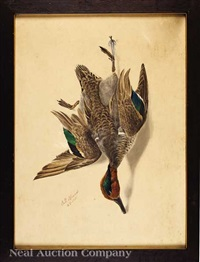 nature morte: green wing teal drake by george luis viavant