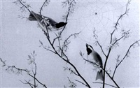 chickadees by alice coutts
