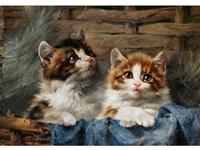 zwei kätzchen im korb mit blauem tuch by joseph denovan adam