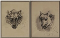 lobo, the king wolf of curronhaw, from life (+ blanca, the white wolf of curronhaw, from life; 2 works) by ernest thompson seton