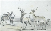 two red deer stags with hinds to the background by robert hills