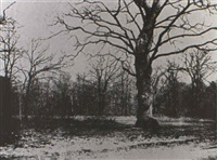 trees, fontainebleau by alphonse louis poitevin