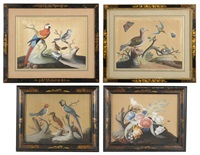 foreign and domestic birds (set of 4) by samuel dixon