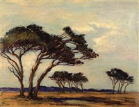 windswept trees by nita spilhaus