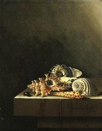 a still life of shells on a marble ledge by adriaen s. coorte