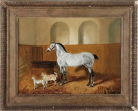 dapple grey in a stable by j. c. partridge