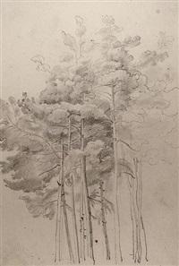 eine gruppe von föhren (study) by august lucas