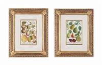 fruit from phytanthoza iconographia (6 works) by johann wilhelm weinmann