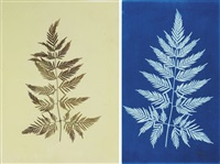 paris arguta (from the hatton fern album) by anna atkins