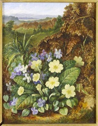 a still life of violets and primula by albert durer lucas