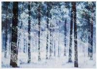winter vegetation by christoffer relander