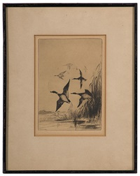 birds by anthony thieme