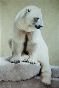 ours blanc by rémi bourquin